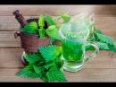 Целебные свойства крапивы 36 народных рецептов лечения крапивой Как правильно солить крапиву Как