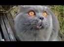 ТАКОГО ОТ НИХ ВЫ НЕ ЖДАЛИ. Говорящие и Поющие Коты. Лучшая Подборка.