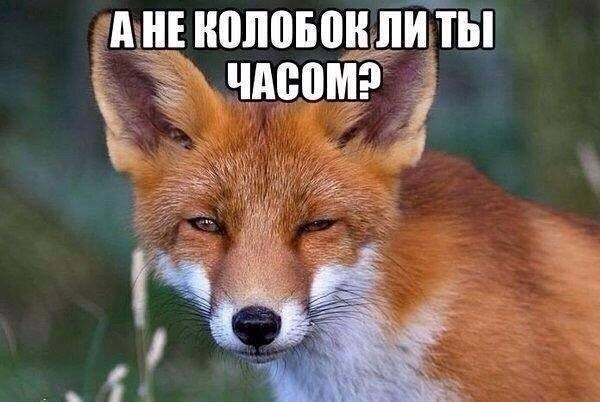 Спецслужбы РФ ведут системную работу в Украине, - Грицак - Цензор.НЕТ 3958