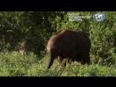 #Самые #милые #животные #в #мире. Документальный фильм.