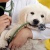 Ветеринарная Помощь. Выезд Москва и область