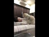 Самый милый будильник в мире