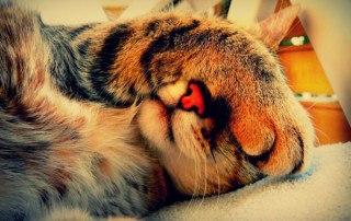 Кошки, киберфест и экскурсия по барам  Выходные обещают быть насыщен