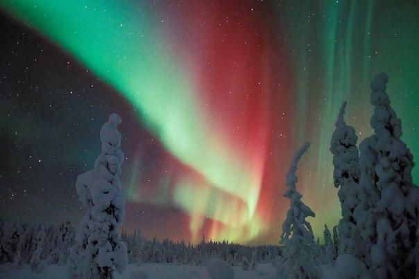 Глинтвейн на крыше, Алиса в стране Чудес и русская Арктика - коротко о