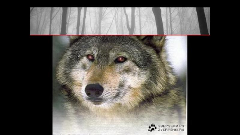 Комиссар Волчья кровь