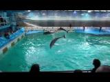 дельфинарий на крестовском острове в СПБ.