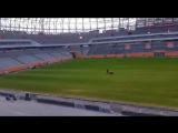 Газон стадион