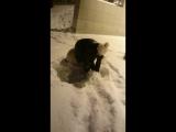 Первый снег и Джама-2.
