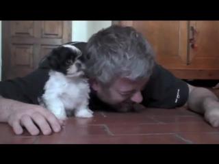 Знакомство хозяина с собакой