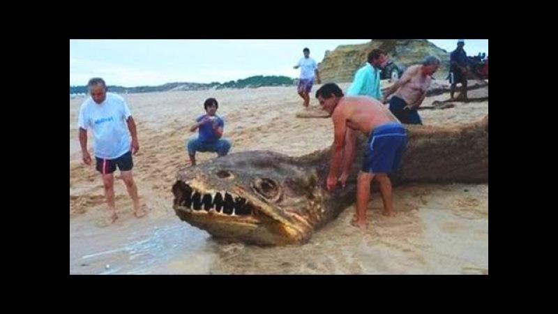 Ужасные подводные монстры Кто живет на Дне Океана