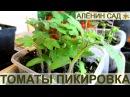 КАК ПРАВИЛЬНО ПИКИРОВАТЬ ТОМАТЫ ИЛИ ПОМИДОРЫ / Выращивание томатов