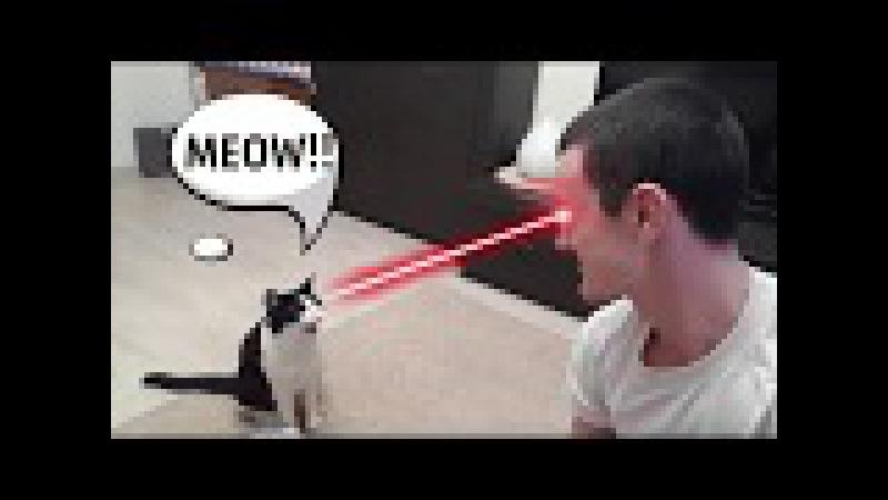 Încă nu ți-ai luat pisica? Uite încă Top 40 Lucruri Uimitoare Despre Pisici 3