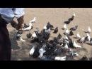О торцовом стиле полета голубей. Часть 2