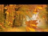 Осенью в лесу - Футажи для видеомонтажа в Full HD(1080p) качестве бесплатно