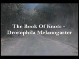 The Book Of Knots - Drosophila Melanogaster