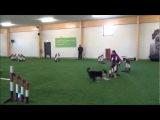 ОK! Jane running Jaakko &amp Janita's dogs Zen, Hitti and Fu