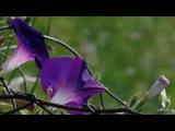 Yiruma   -    The  Moment