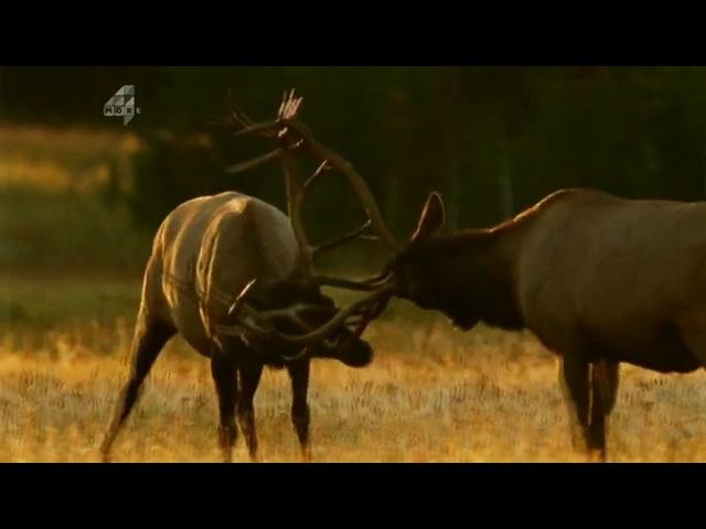 BBC: Секс, смерть и смысл жизни: Грех / 1 серия