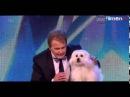 El perro que habla en los Britain's Got Talent