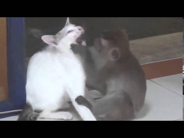ПРИКОЛЫ ПРО ЖИВОТНЫХ : обезьяна, Кошка,козел,страус