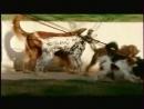 Реклама и анонс Россия, 21.04.2007 Twix Els, Palmolive, Nivea, Биолан, AquaMinerale, Bavaria, Rich, Pedigree, Colgate, Avon