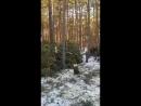 Видеофакт на Сергеляхском шоссе 13 км вырубают лес Якутск