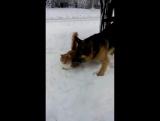 кот, пес и снег
