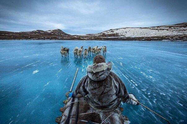 На собачьих упряжках по Гренландии