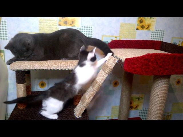Котенок и кошка тетя
