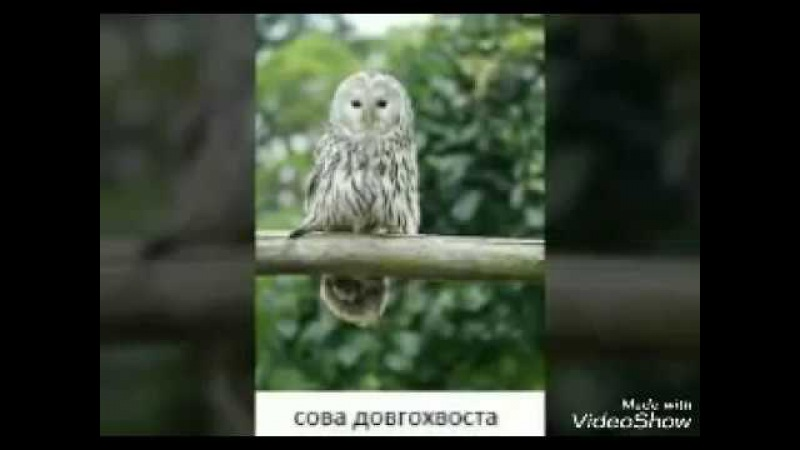 хищные птици занесенные в красную книгу Украины