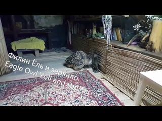 Филин Ёль и зеркало. Eagle Owl Yoll and the mirror.
