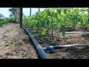Капельный полив с автоматическим таймером что нужно знать В гостях у канала Во саду ли в огороде