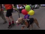 Gay Pride Parade Dominic WBBZ TV