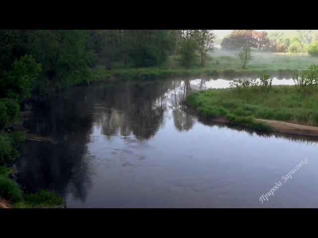 Пение Птиц. Звуки природы. Природа. Лес. Река. Утро. Релакс. Медитация. Сон. Туман.