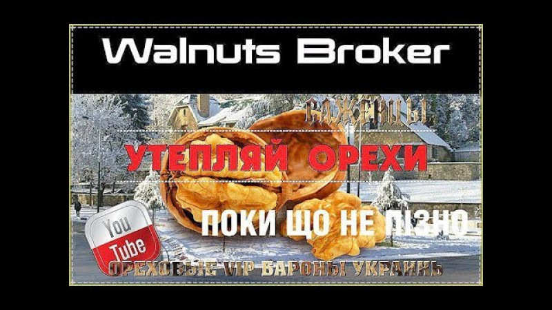 Утепление саженцев грецкого ореха Кочерженко, Идеал, Иван Багряный от Walnuts Broker