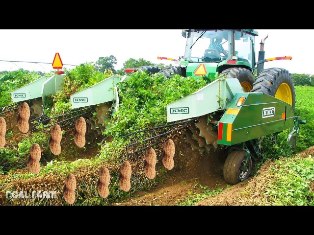 Peanut Harvesting Machine || How to Harvest Peanut || How it works Noal Farm modern agriculture 2018