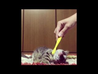 Как чешут лемура