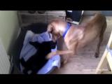 Кошачий беспредел: как собаки реагируют на то, что их место отбирает кошка
