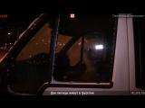 Две лисицы живут в фургоне. Прямой эфир