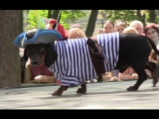 В Петербурге прошёл традиционный парад такс