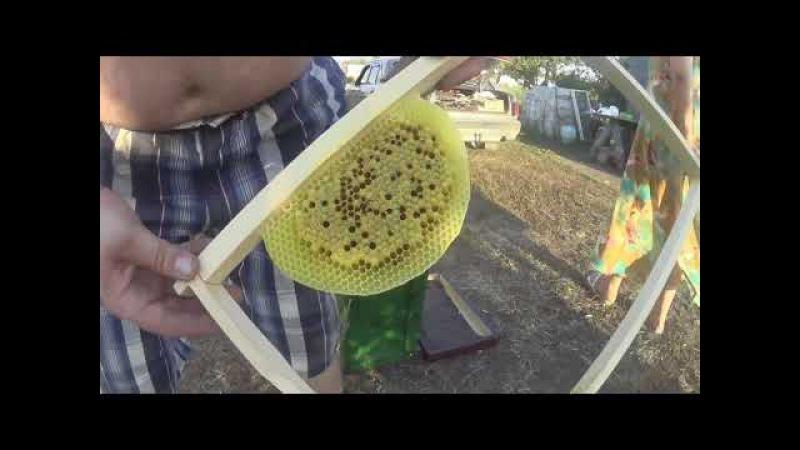Первый неудачный опыт поимки пчелиного роя
