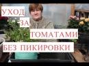 Выращивание Томатов без Пикировки. Рассада в Улитке. 25.03.2017