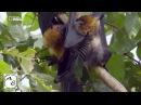 Мир дикой природы Джунгли Азии