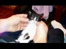 Смешной кот Бэтмен кайфует под фанковую музыку