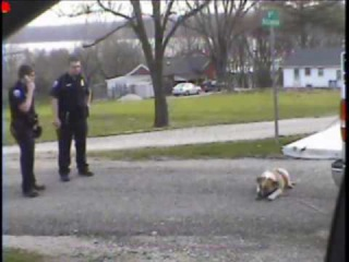 ASPCA THIS IS A CRY FOR HELP: ANIMAL CRUELTY BY THE LAGRANGE MISSOURI POLICE DEPARTMENT part 2