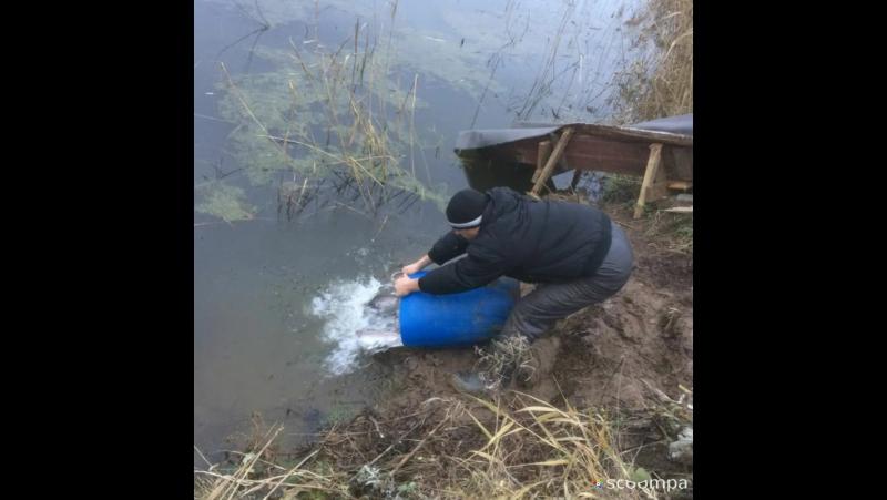 рыбалка на водоемах вблизи д кокино и дозапуск форели .18.11.17.