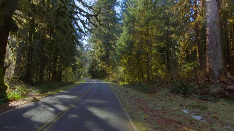 Scenic Drive ¦ Upper Hoh Road, Olympic Peninsula - 2HRS Video Music