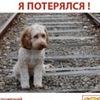 Я потерялся! Объявления о пропавших животных