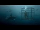 Что может случиться, если вы в клетке, а акула в море