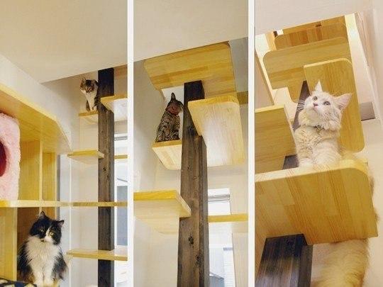 Игровые площадки для кошек в вашей квартире